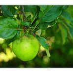 Beiss nicht gleich in jeden Apfel...