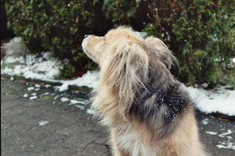 """beleidig nach dem """"Schneebad"""""""