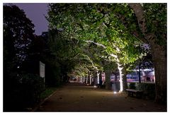 Beleuchtete Bäume am Mainufer in Frankfurt/M