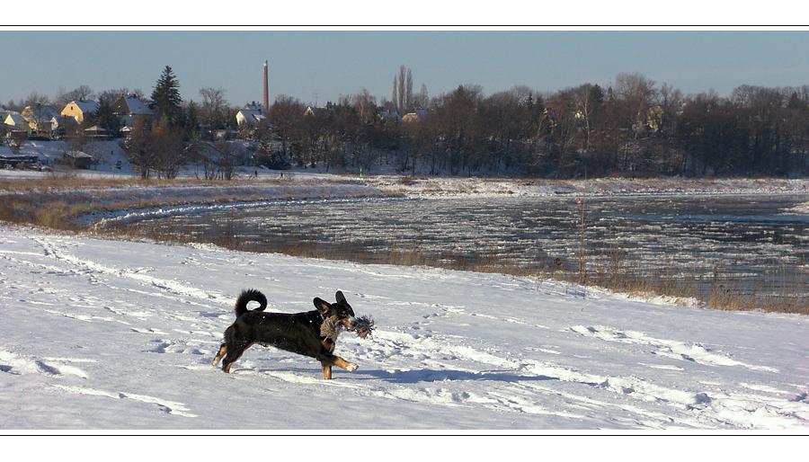 Belgern – Elbe – Winter – Hund