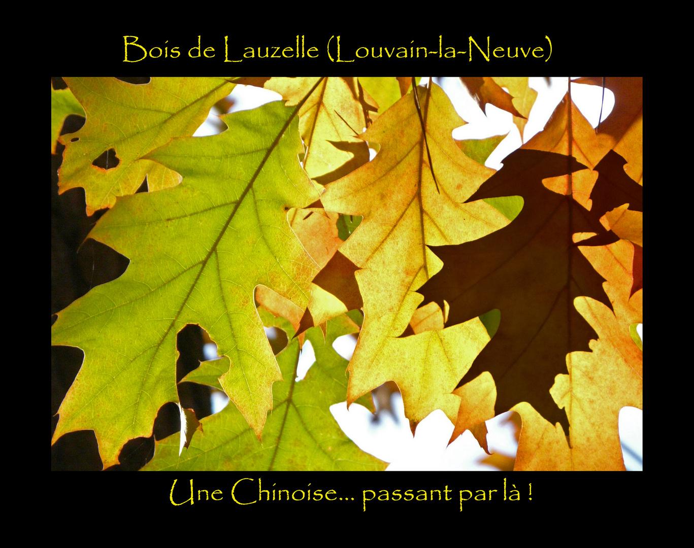 Belgique, Louvain-la-Neuve, Bois de Lauzelle : une Chinoise... passant par là !