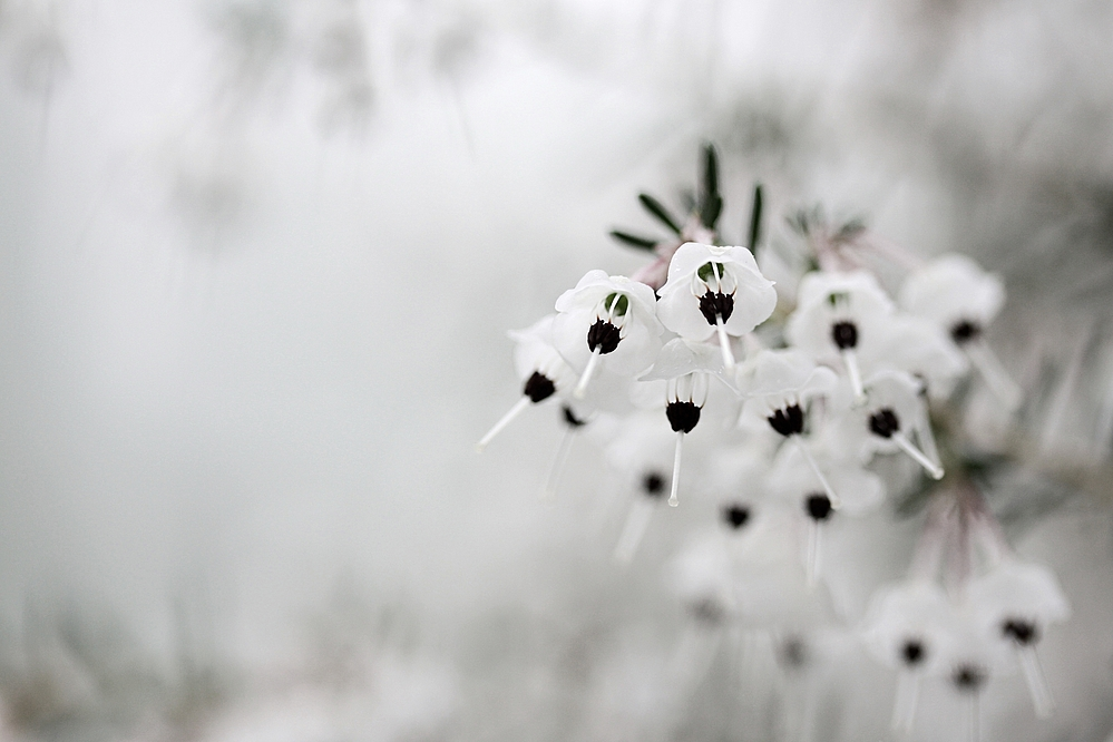 bella bianca ....