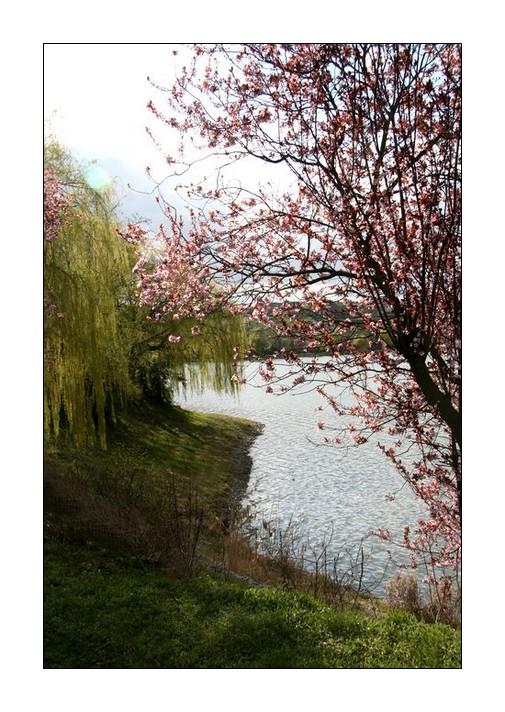 Bella Primavera