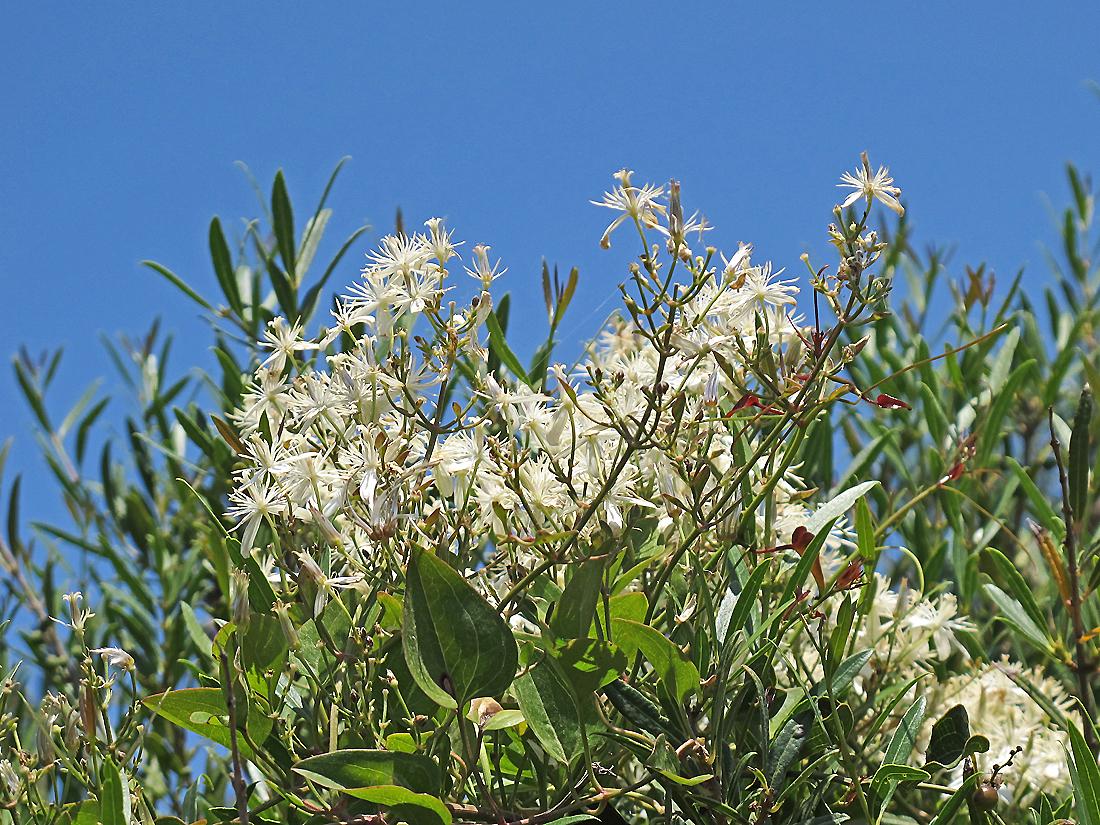 Bella Sardegna - Insel der Blüten / Isola dei fiori (2)
