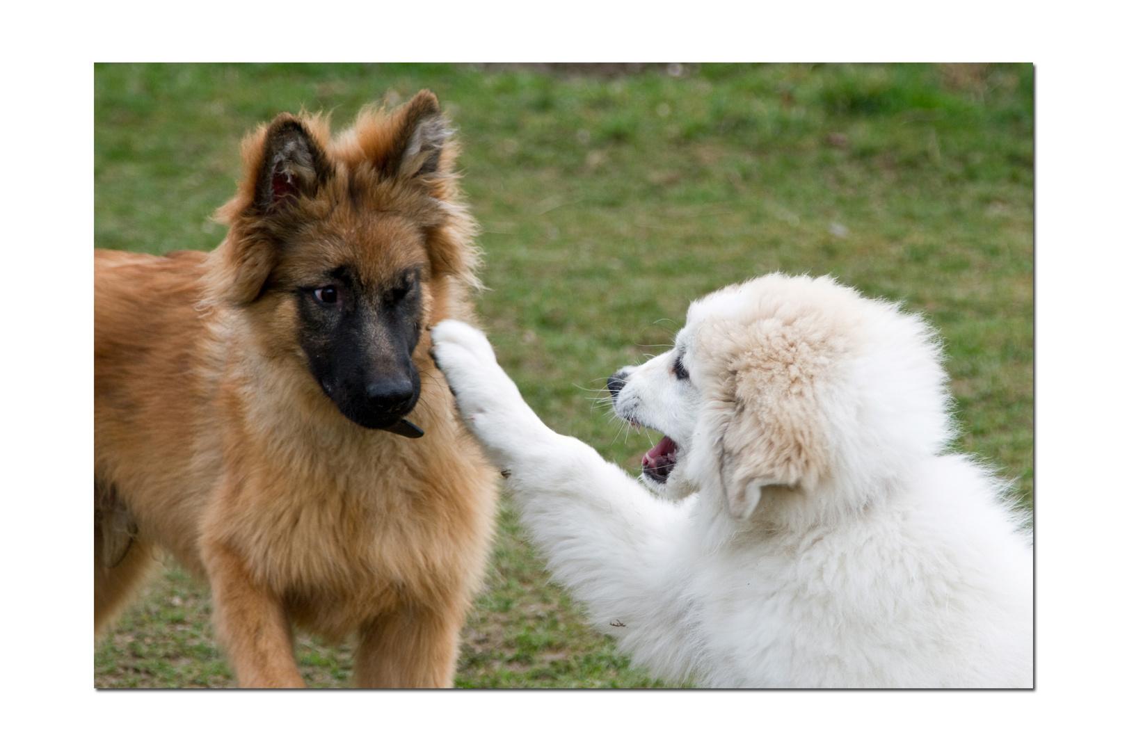 Bella und Baloo