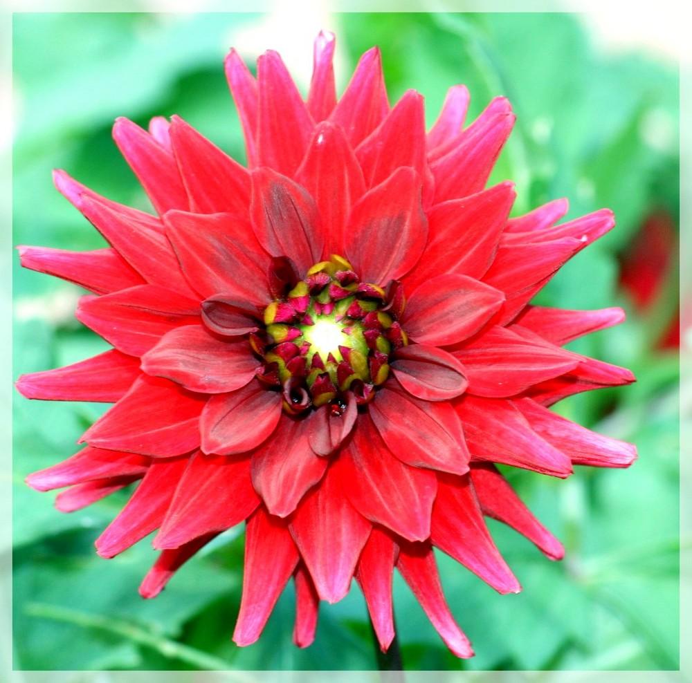 Belles couleurs
