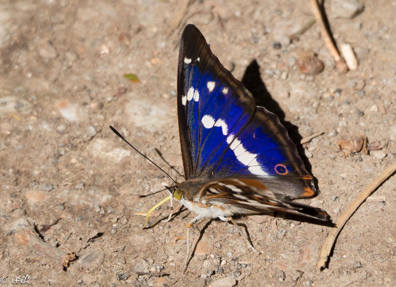 Belles couleurs sur ces papillons !