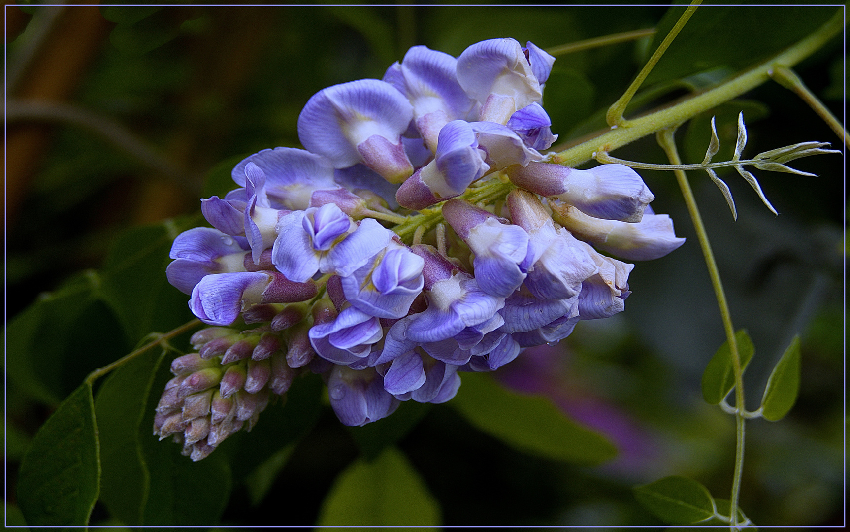 Belleza  azul