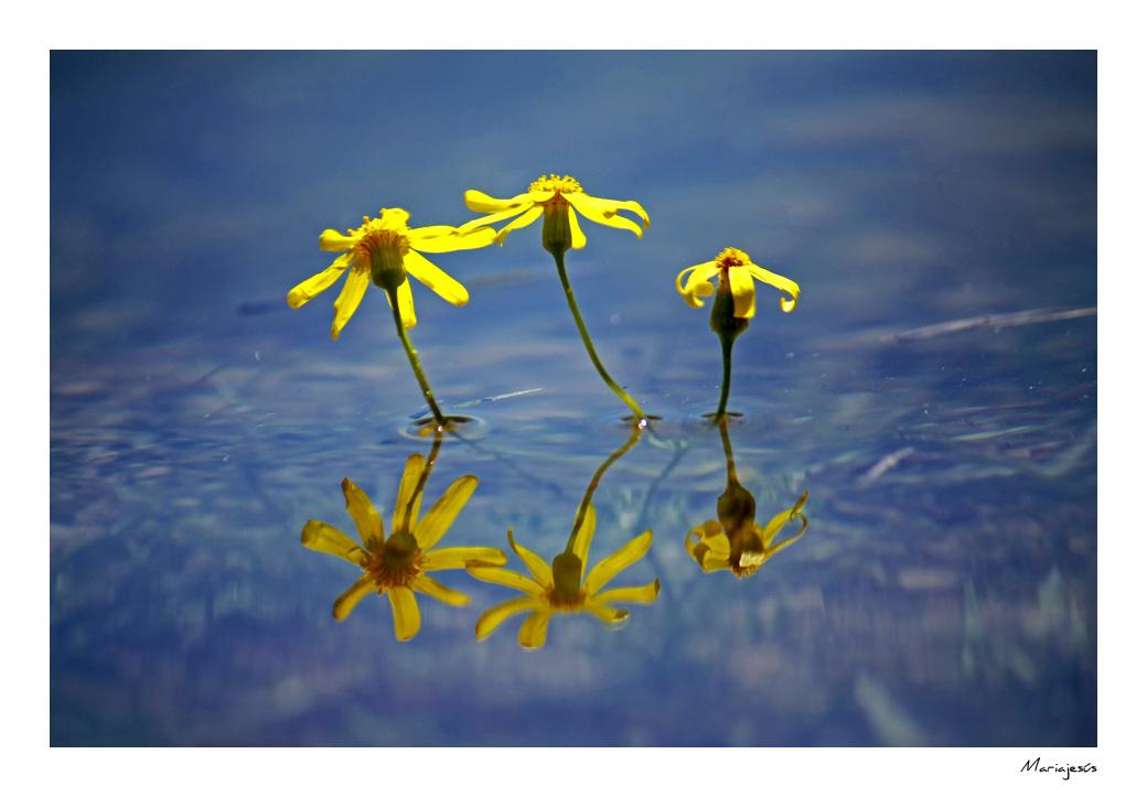 Belleza en el agua (2)