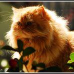 Belleza felina