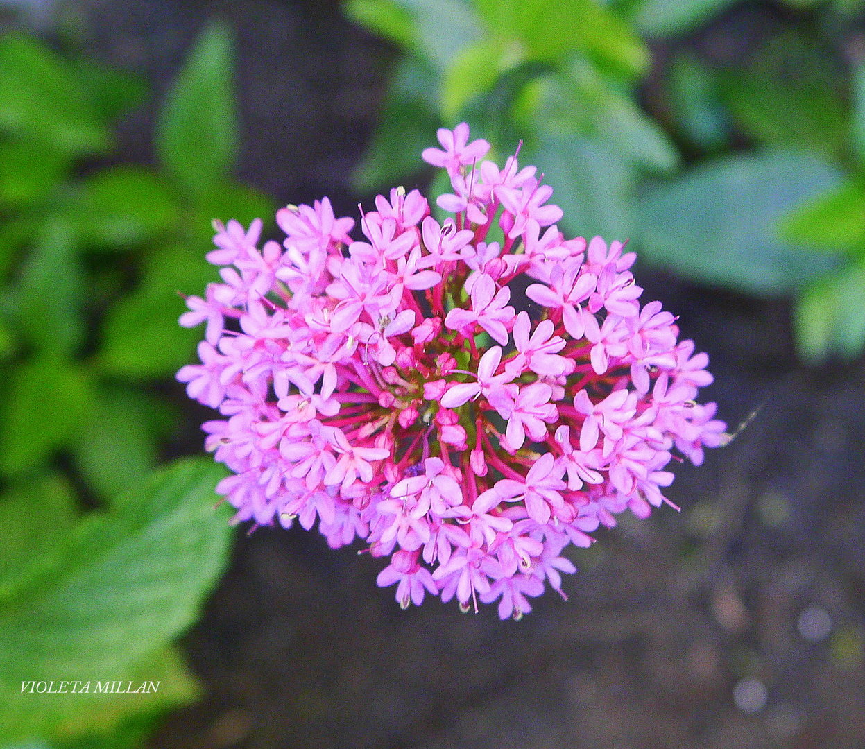 bellezas de mi jardin