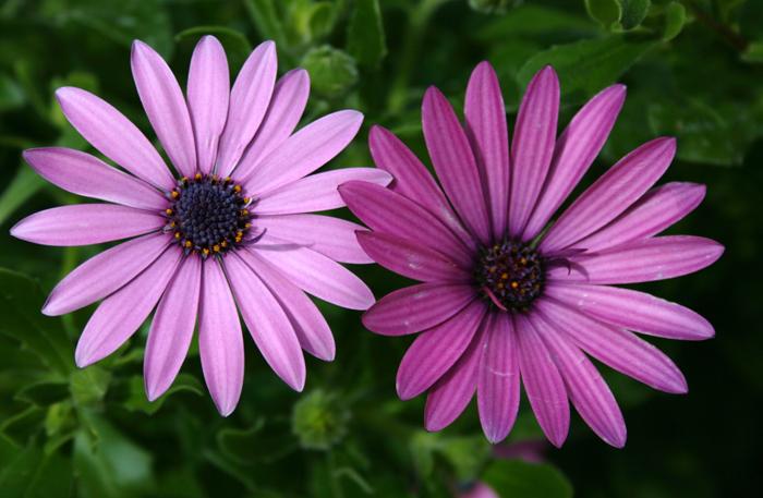 Bellissimi fiori foto immagini piante for Foto di zig e sharko