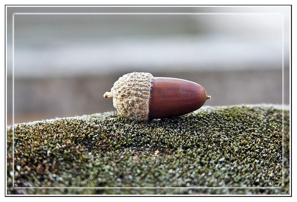 Bellota Iberica sobre musgo
