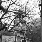 belltower in early spring