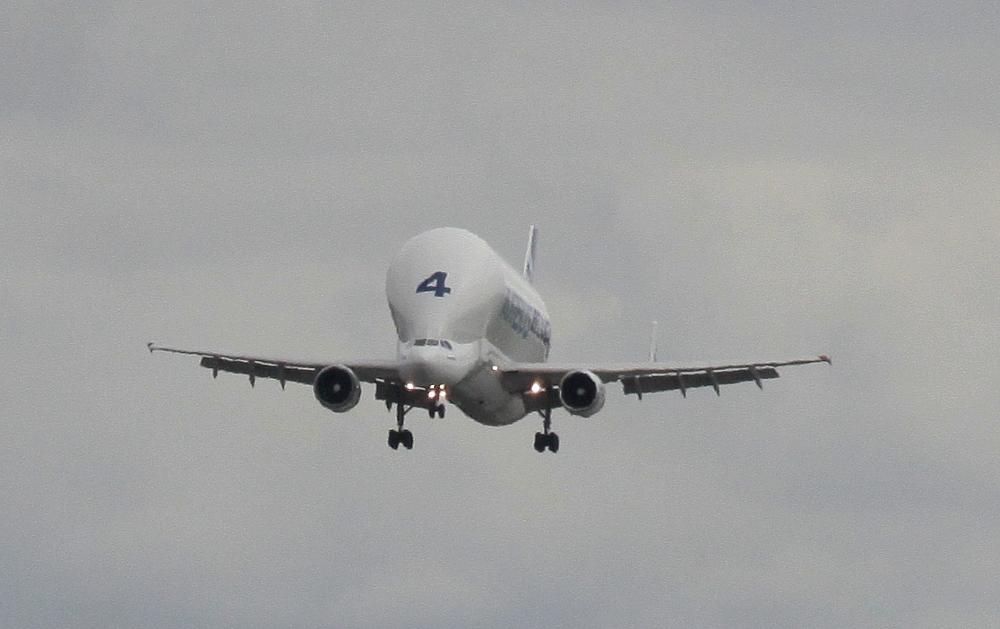 Beluga im Landeanflug