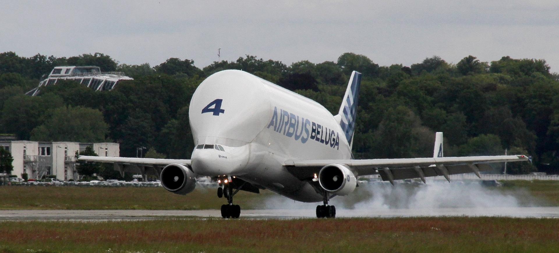 Beluga, Landung