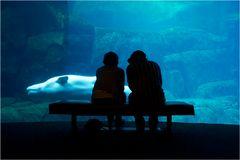 *Beluga Talk*
