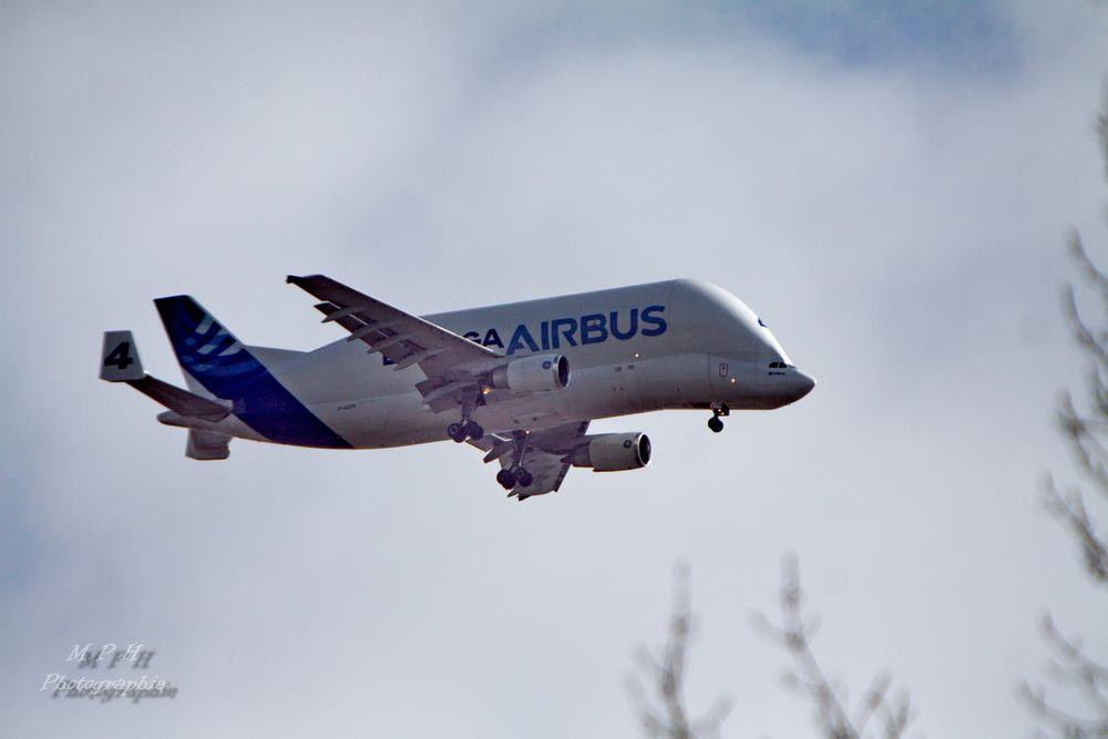 """""""Beluga"""" von Airbus (1)"""