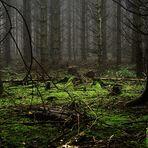 bemooster, herbstlicher Märchenwald