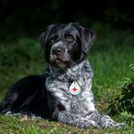Ben der Rettungshund (1)
