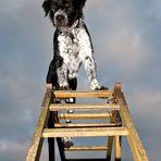 Ben der Rettungshund (2)