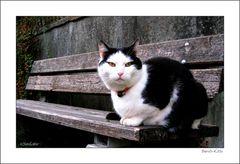 Bench-Kitty