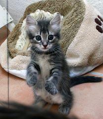 Benji sitzt gerne mal so rum:-)