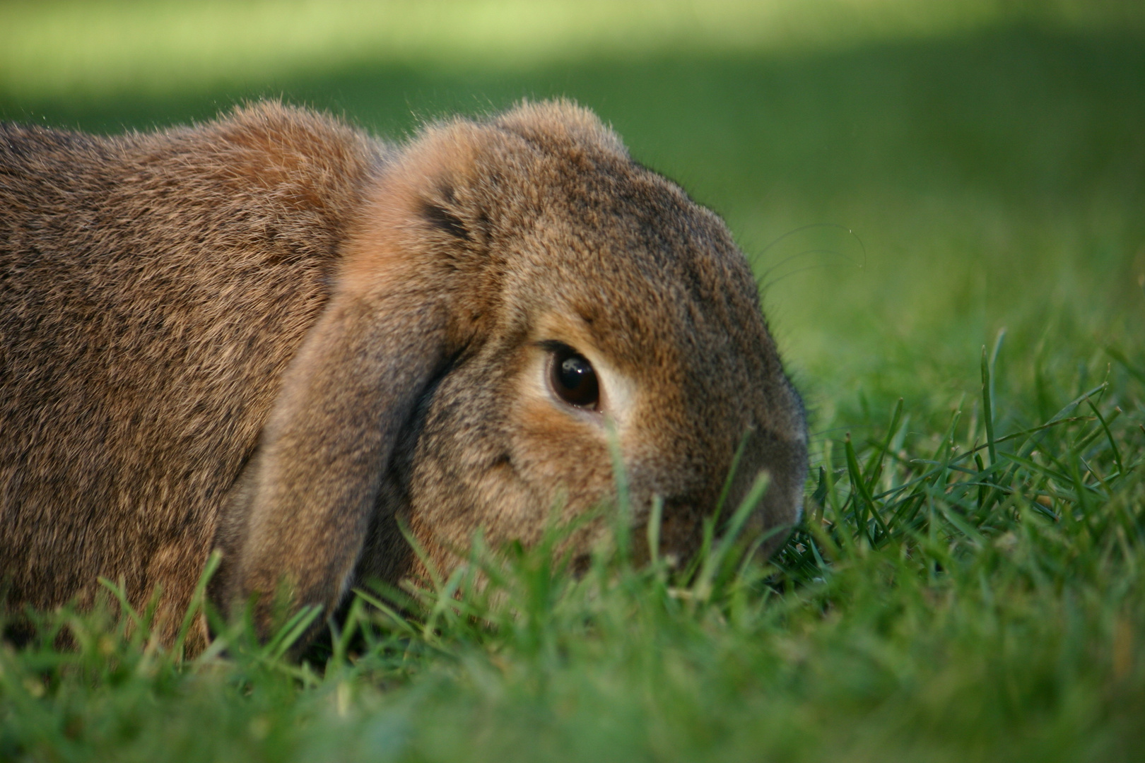 Benny-Bunny