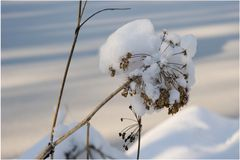Berce en hiver