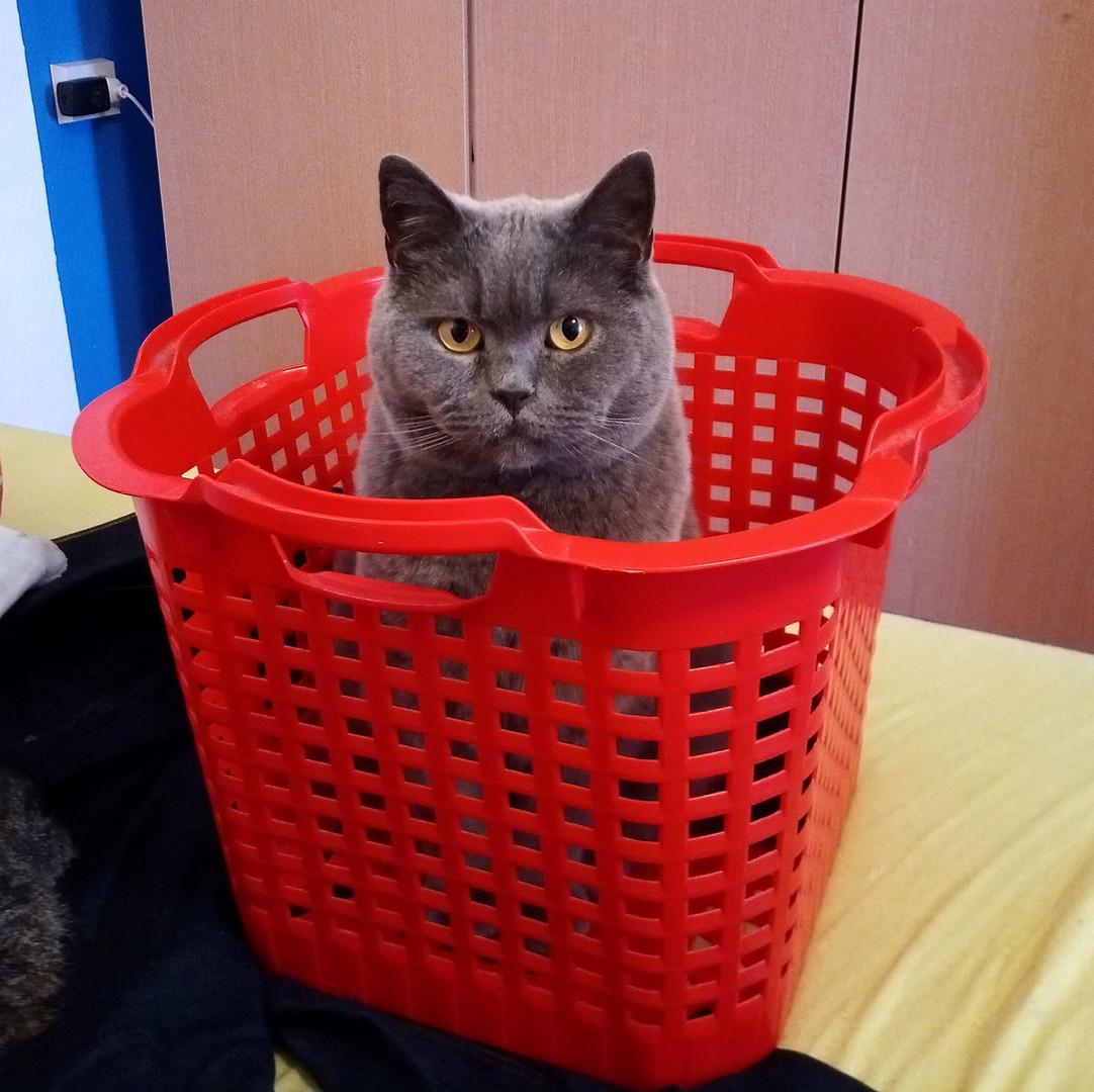 Bereit für die Katzenwäsche