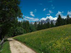 Berg-und Wiesenidyll