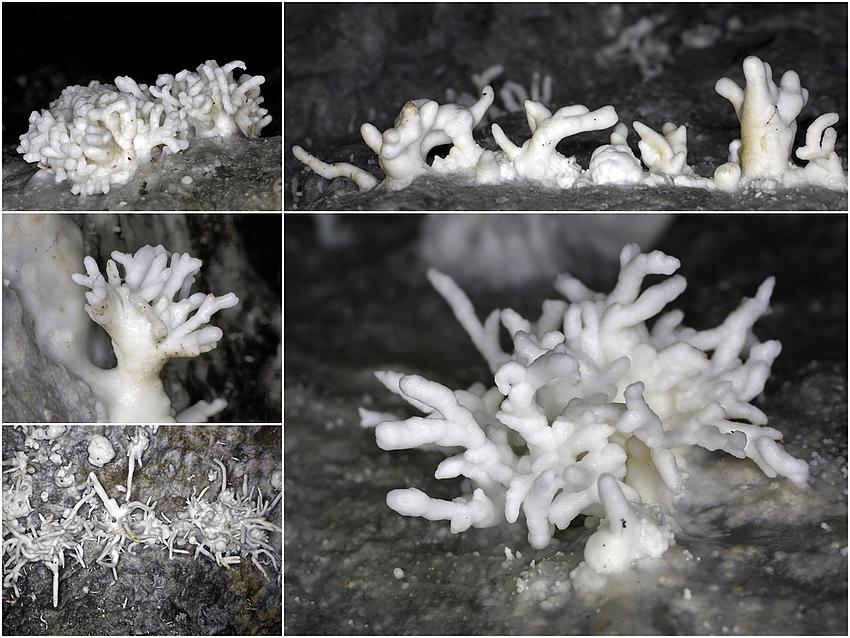 Bergbaufolgelandschaft 4: Eisenblüten