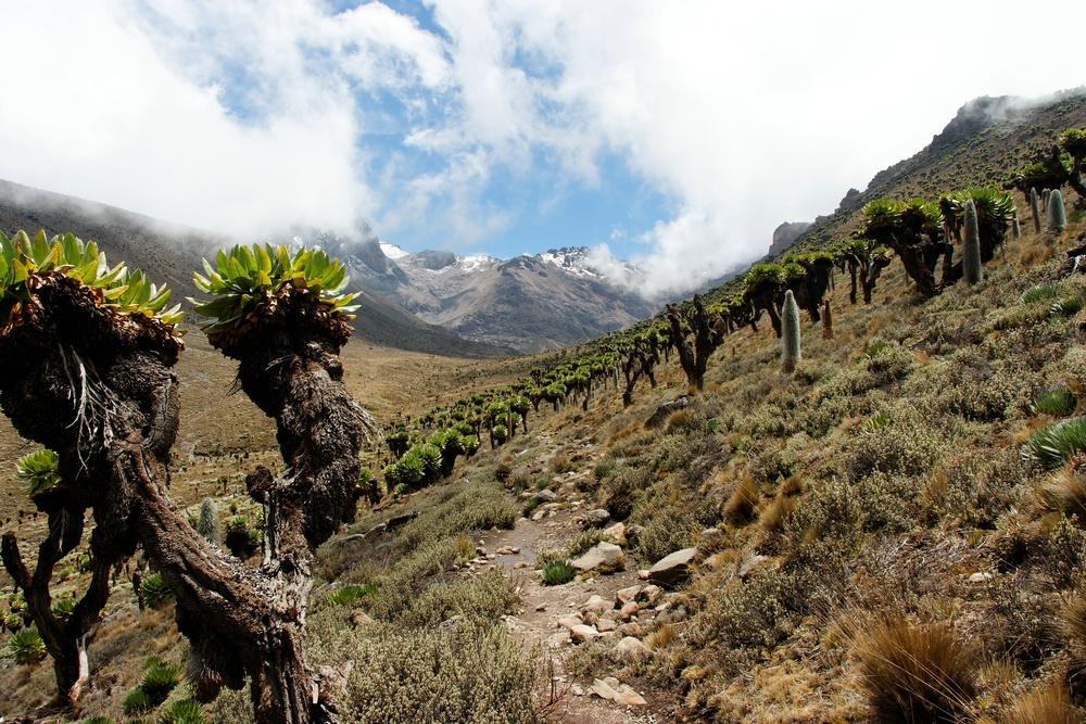 Bergblick am Mount Kenia