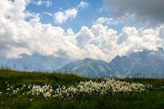 Bergblumen...