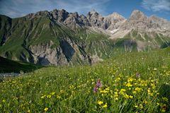 Bergblumen mit Bergwelt