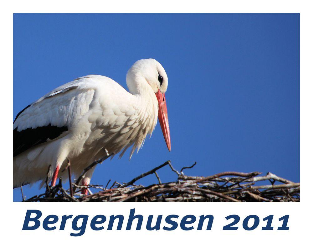 Bergenhusen 2011