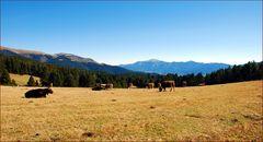 Bergische Idylle # Montañas idílicas