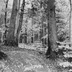 Bergmischwald