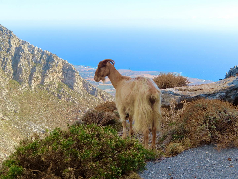 Bergpanorama mit Ziege