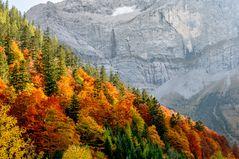 Bergwald im Risstal