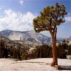 Bergwelt im Yosemite-Nationalpark
