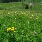 Bergwiese in Hochsavoyen