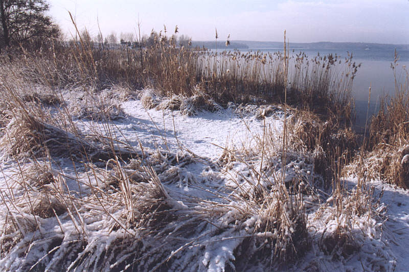 Bergwitzsee im Winter