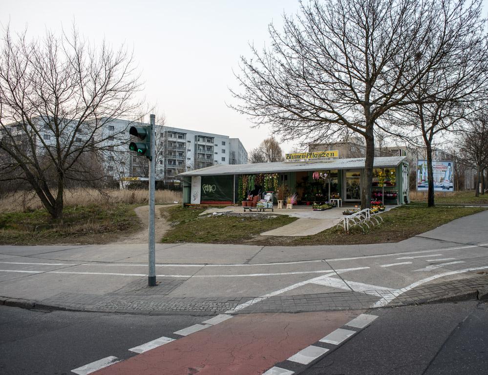 Berlin, Marzahn-Hellersdorf März 2014: Blumen und Pflanzen
