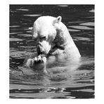 Berliner (Eis)Bär