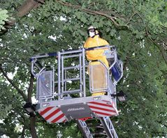 Berliner Feuerwehr: Im Kampf gegen die Raupen
