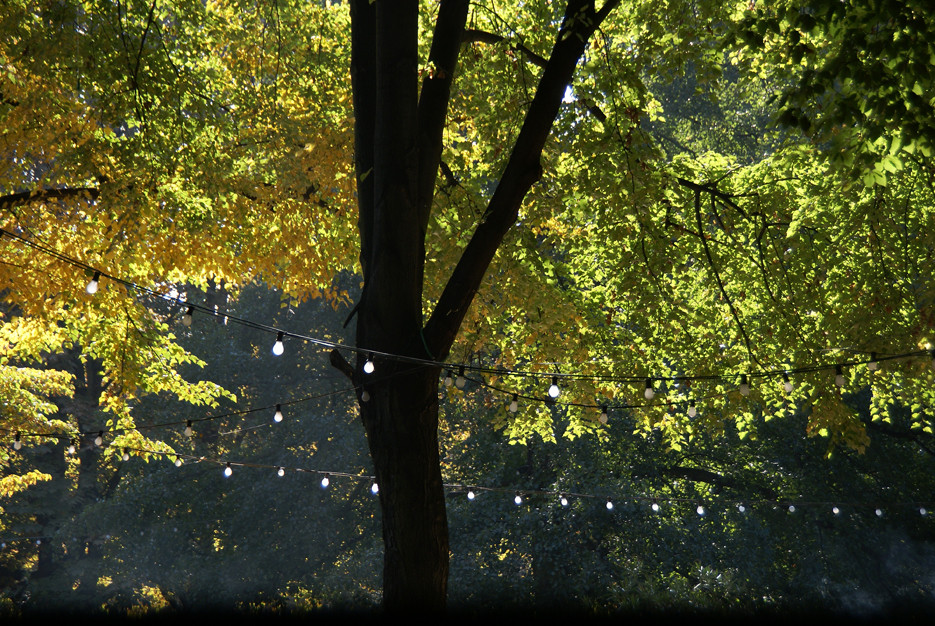 Berliner Tiergarten, 11.10.08 – 08