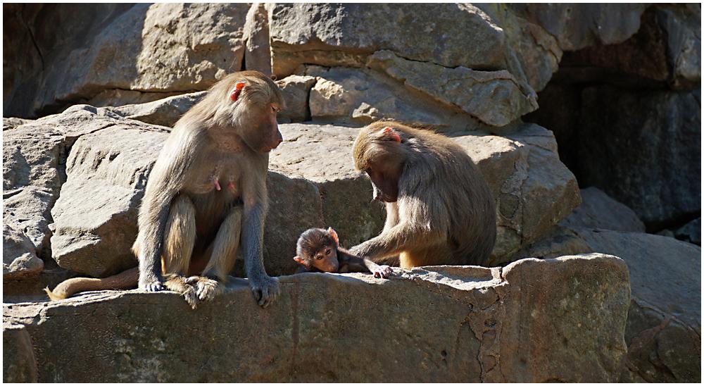 Berliner Zoo 05