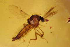 Bernstein Inkluse Fliege/Mücke mit Fühlern, Kopal Kolumbien