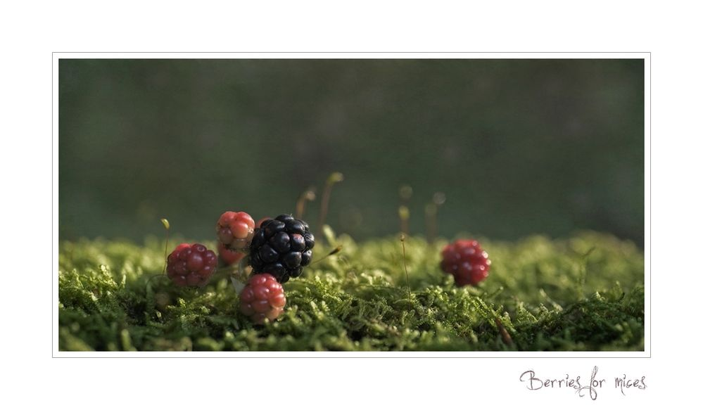 Berries for mices
